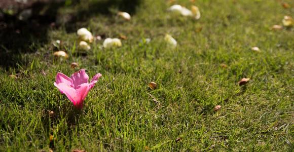 咲き落ちて咲く華